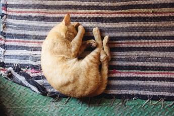cap napping